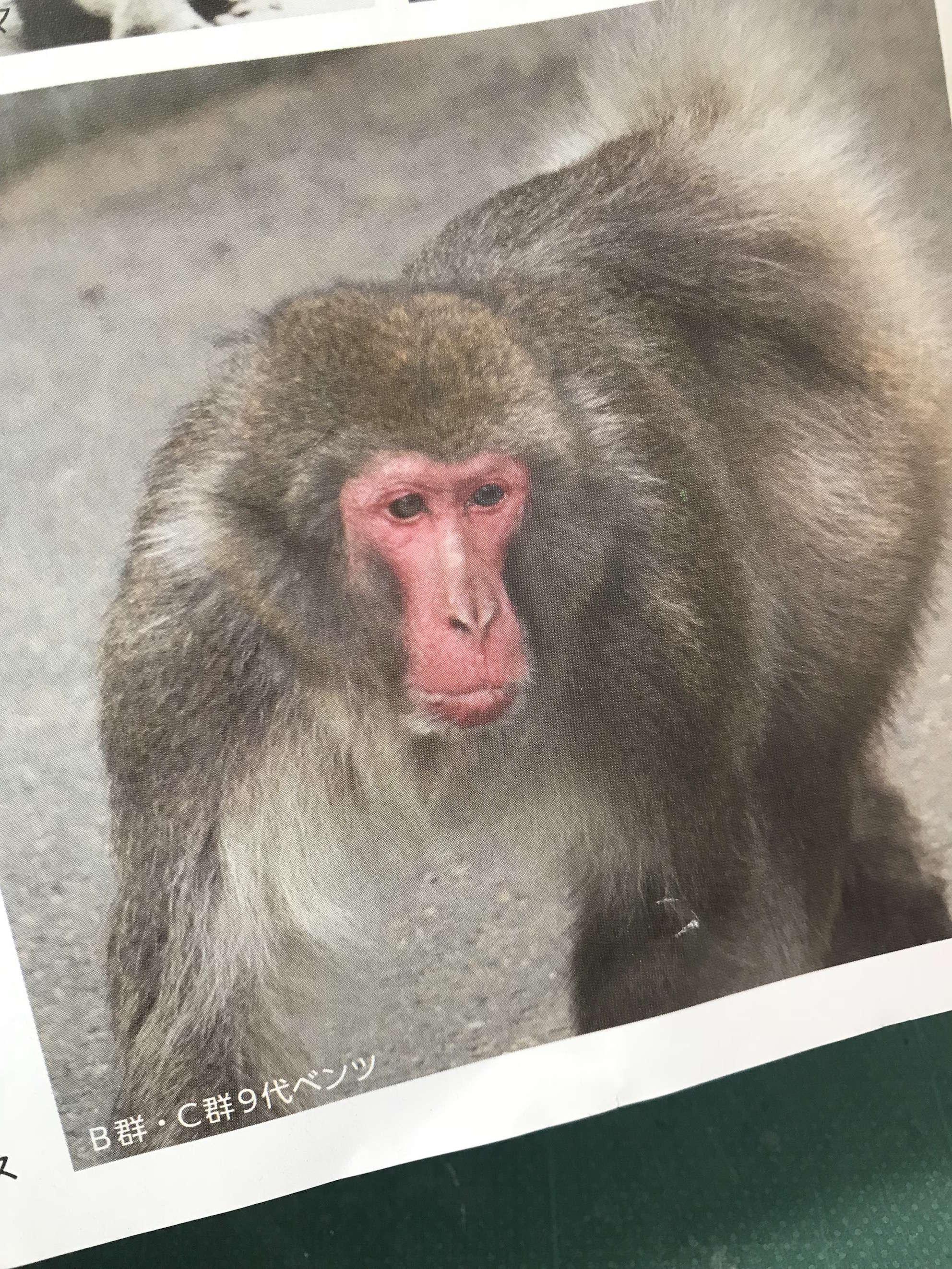 image どうした? 高崎山の猿たち