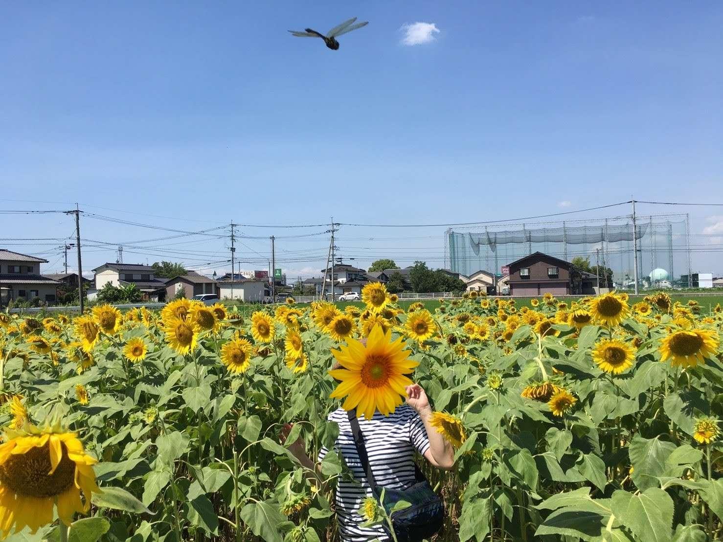 image 夏♪夏♪夏♪夏♪