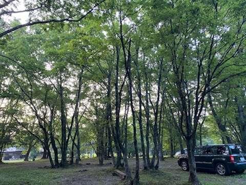 image キャンプの沼